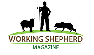 working-shepherd-magazine.jpg